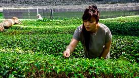 Tea Garden Day 1-5.jpg