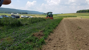 Reduced-Tillage Organic Systems