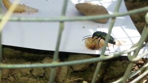 Arthropod Predation