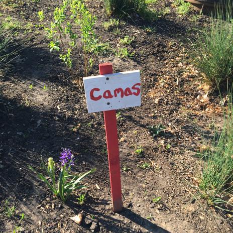 garden pic.jpeg