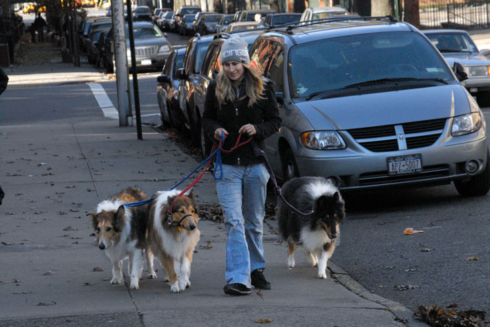 A Much Younger Hanna Walking Collies
