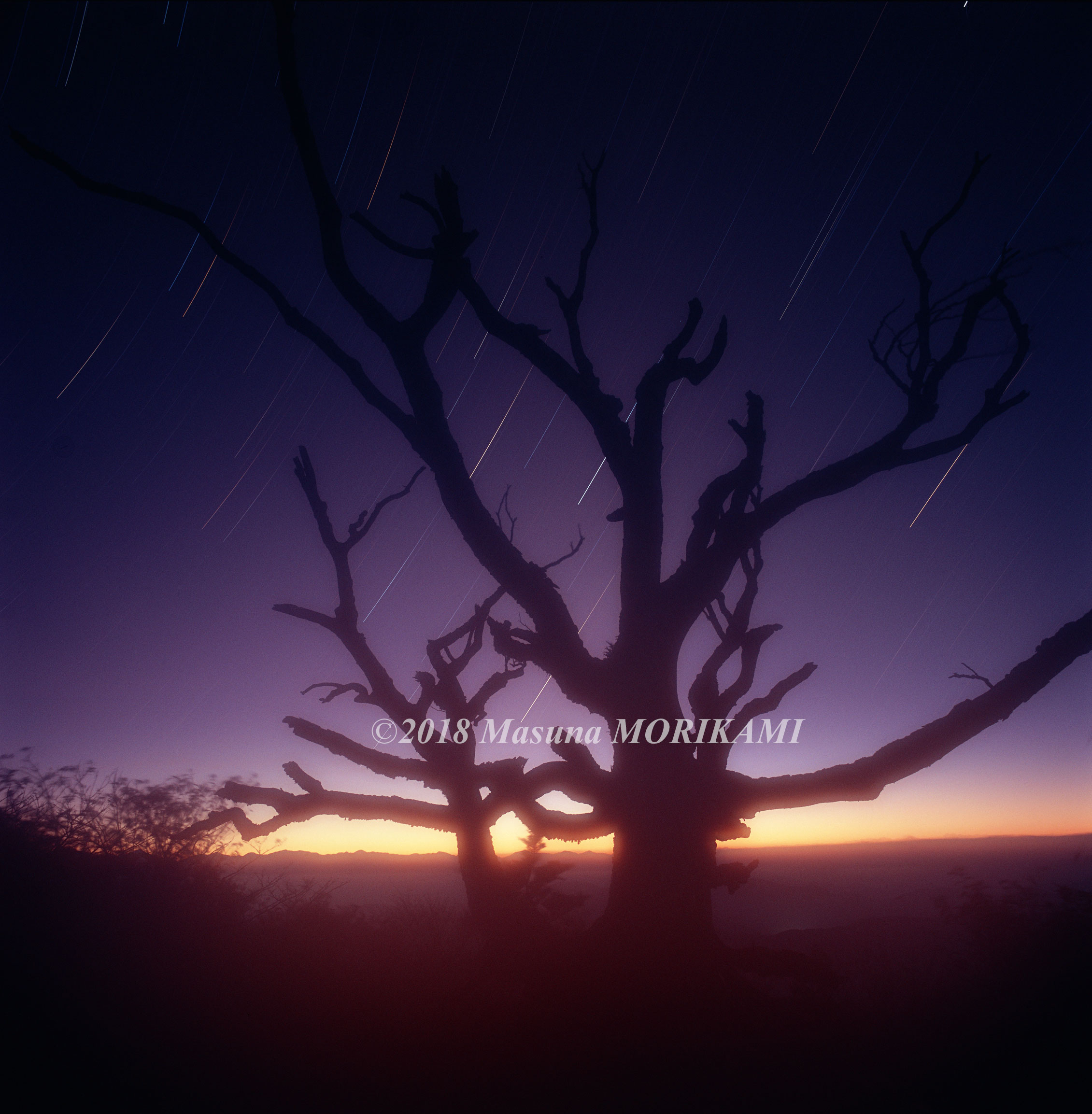 19 夜明け待つ老木/愛知県豊根村/2008.10.12 4:08