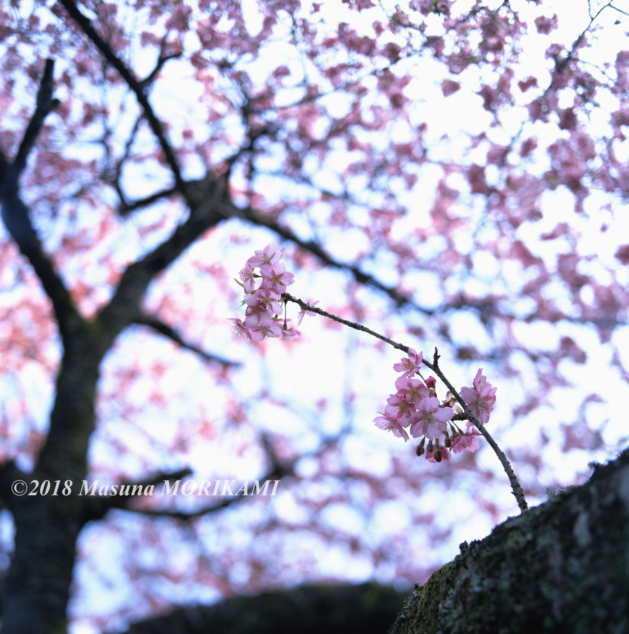 03 見守られ/愛知県新城市/2011.4.2 8:40
