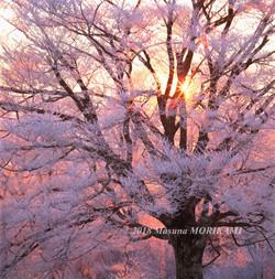 23 陽光の恵み/長野県根羽村/2006.12.3 6:45