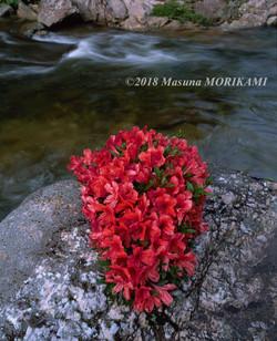 11 水辺のオブジェ/長野県根羽村/2009.7.4 6:55