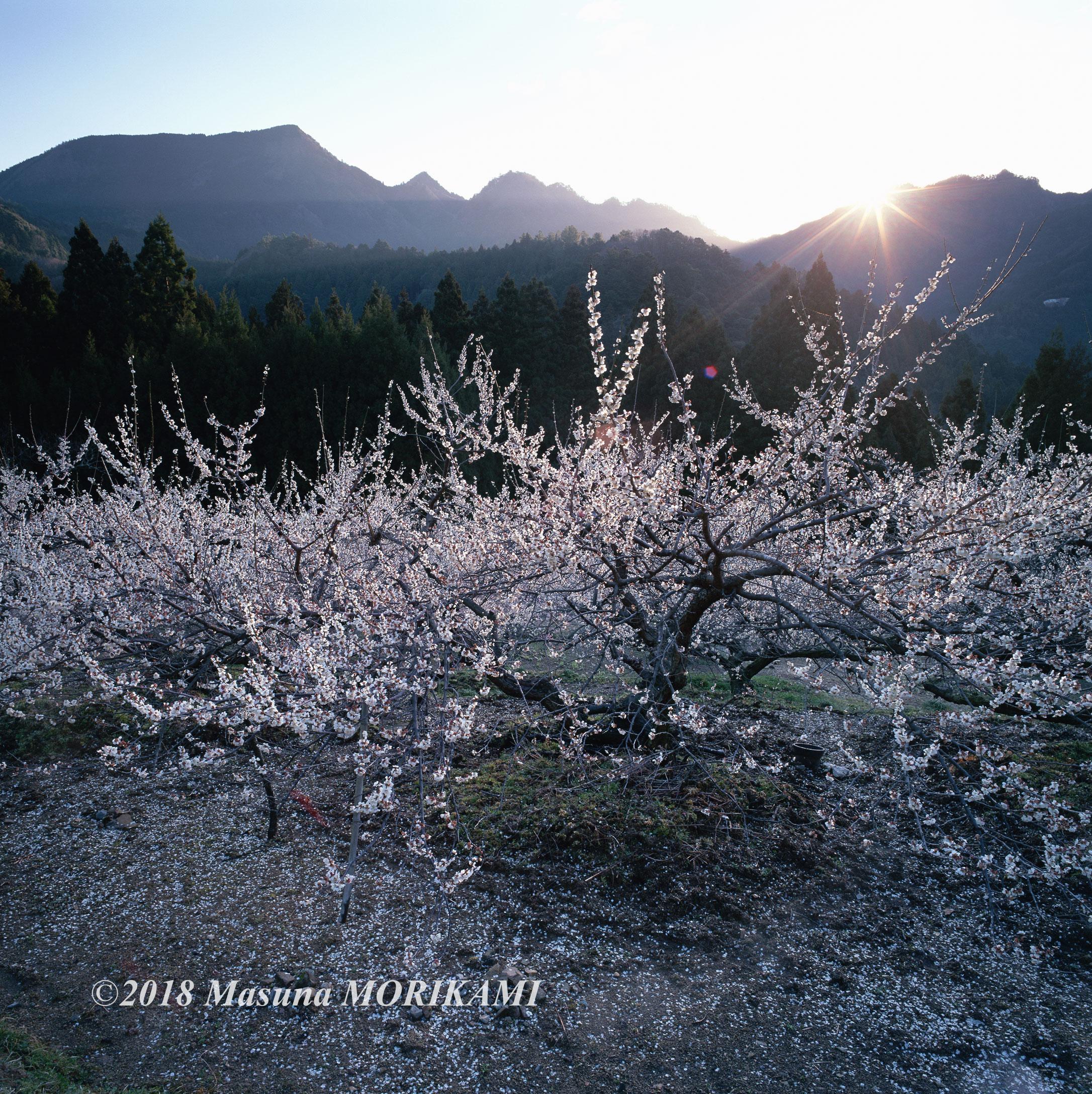 01 目覚めの時/愛知県新城市/2008.3.21 6:20