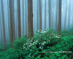 10 水無月の森/愛知県東栄町/2013.6.15 10:45