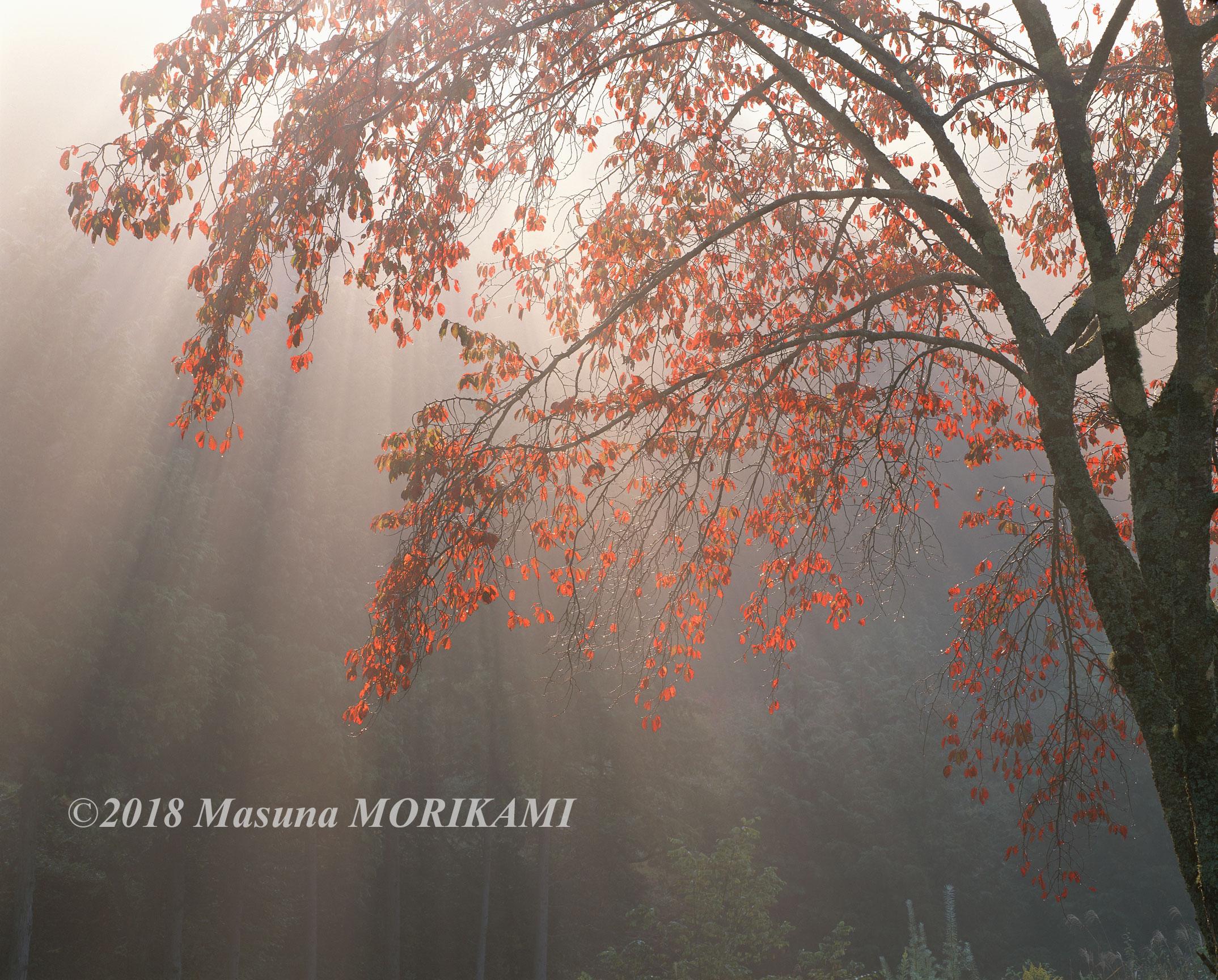 16 束の間の舞台/長野県売木村/2009.10.18 7:30