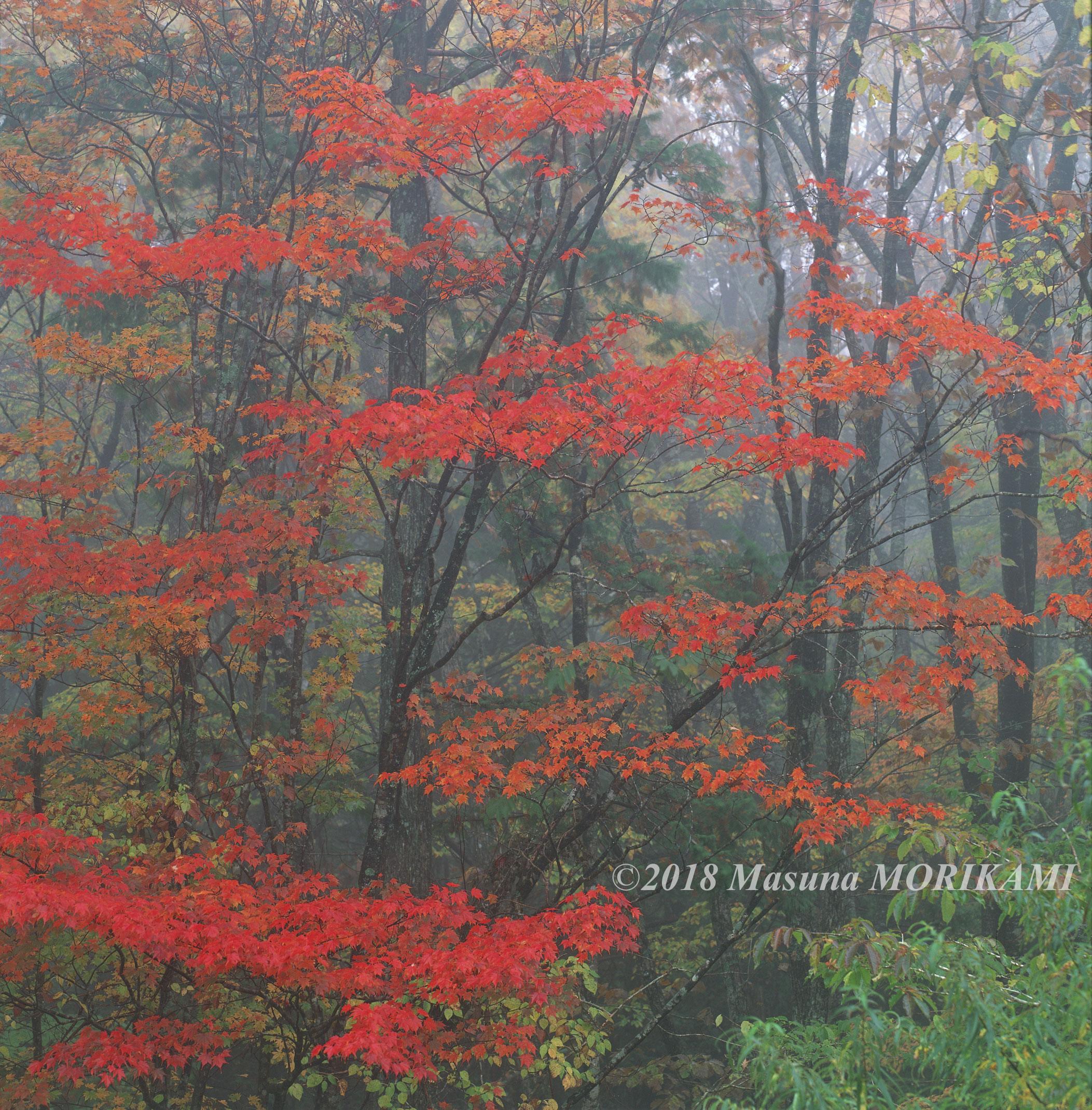 15 霧に映えて/長野県根羽村/2011.10.23 12:45
