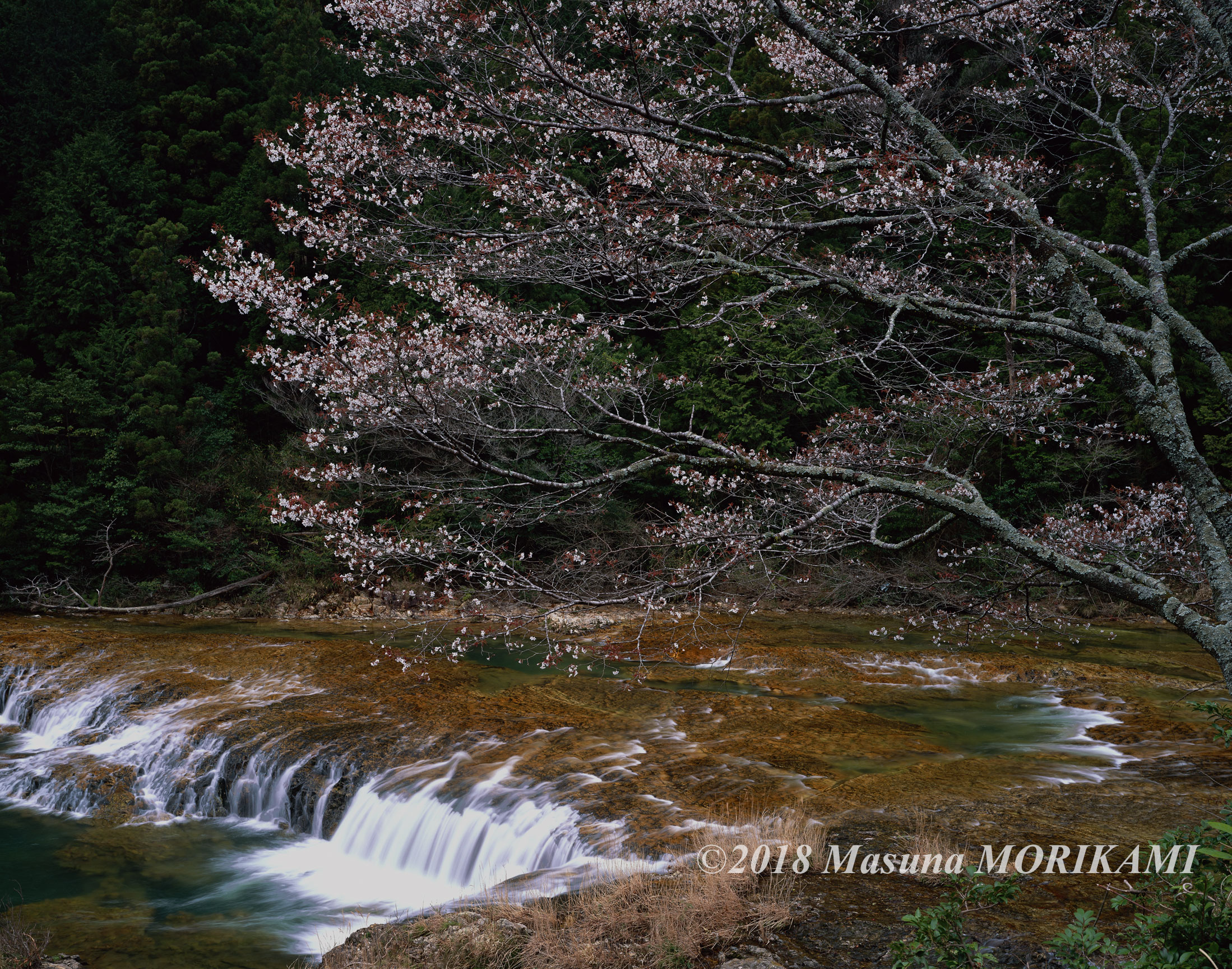 04 春の瀬音/愛知県新城市/2007.3.31 12:30