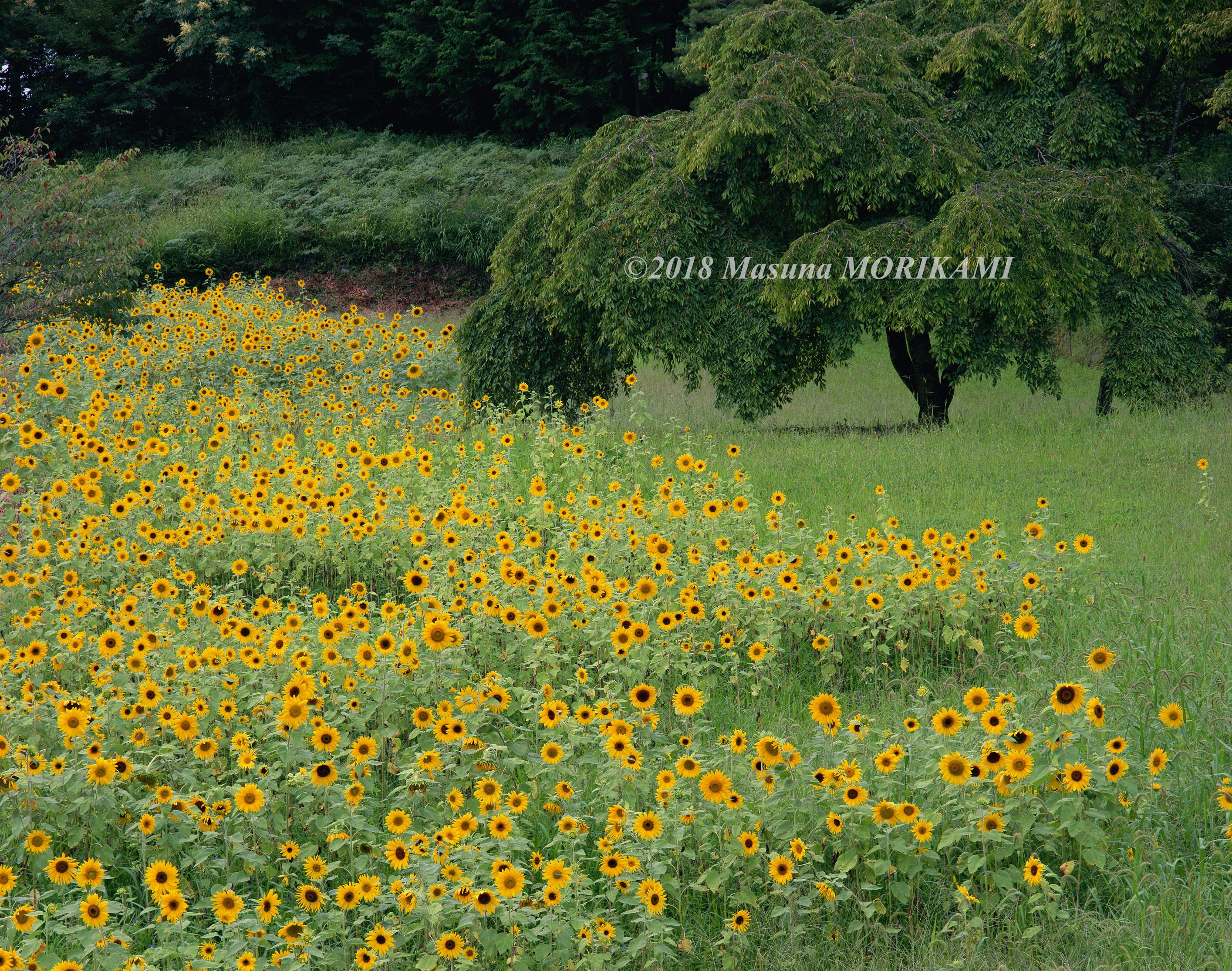 11 夏色のにぎわい/長野県売木村/2007.8.25 13:10