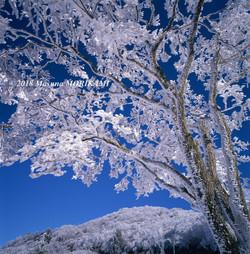 27 厳寒の衣/長野県根羽村/2007.12.16 9:58
