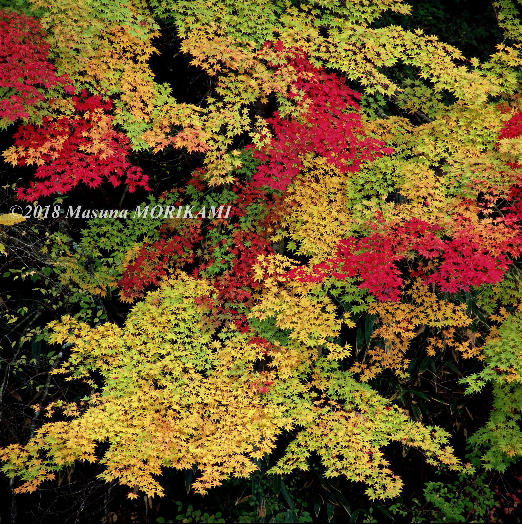 13 色うつり/愛知県豊根村/2006.11.4 16:23