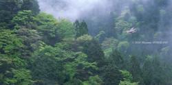 05 萌ゆる季節/愛知県東栄町/2014.4.29 12:35