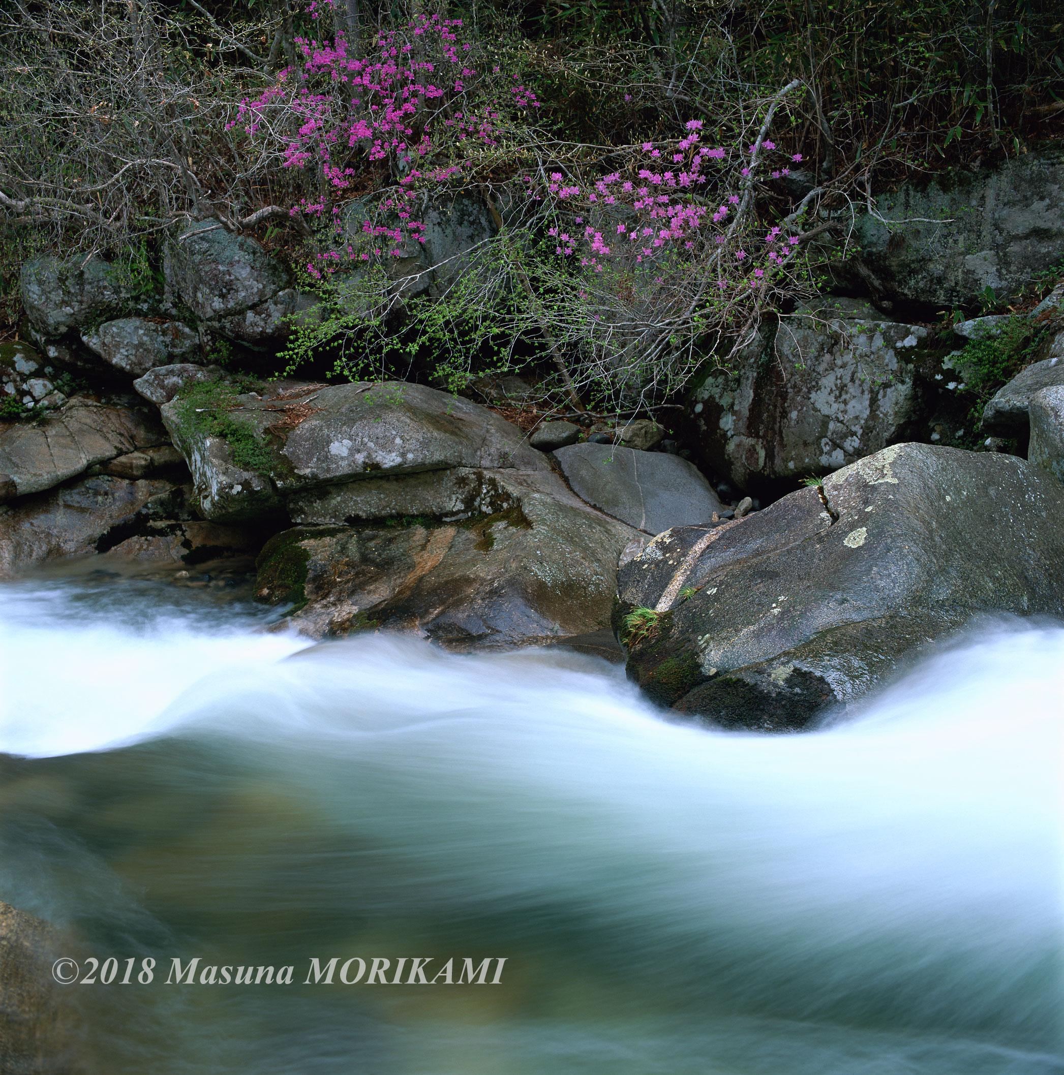 06 清流にそえて/長野県根羽村/2011.4.30 13:43