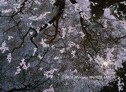 04 池に咲く/愛知県設楽町/2008.4.12 10:00
