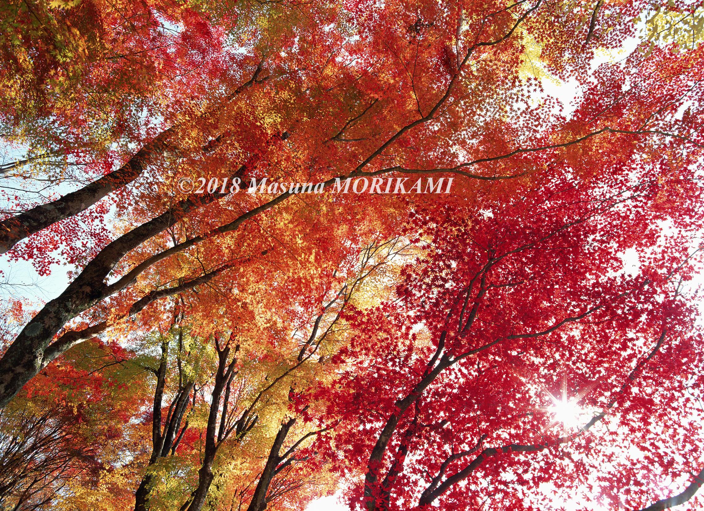 17 錦の森/愛知県豊田市/1998.11.22 8:00