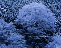 24 静寂の中で/愛知県東栄町/2004.1.18 10:58