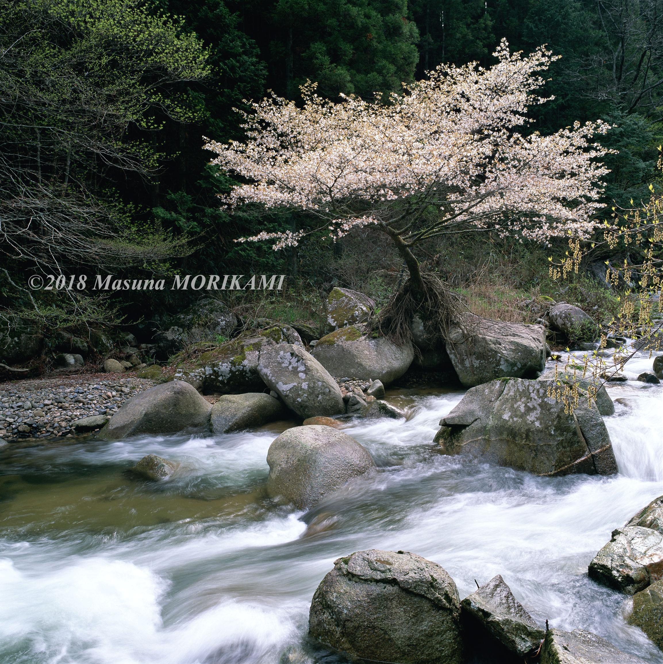 03 石にとどまる/長野県根羽村/2003.4.27 9:10