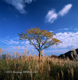 14 秋空を見上げ/愛知県豊根村/2007.11.4 15:32