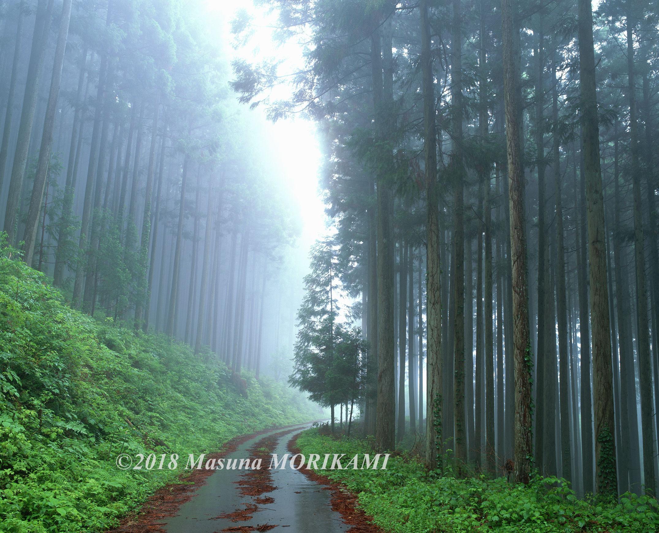 10 深林への誘い/愛知県東栄町/2009.6.5 11:35