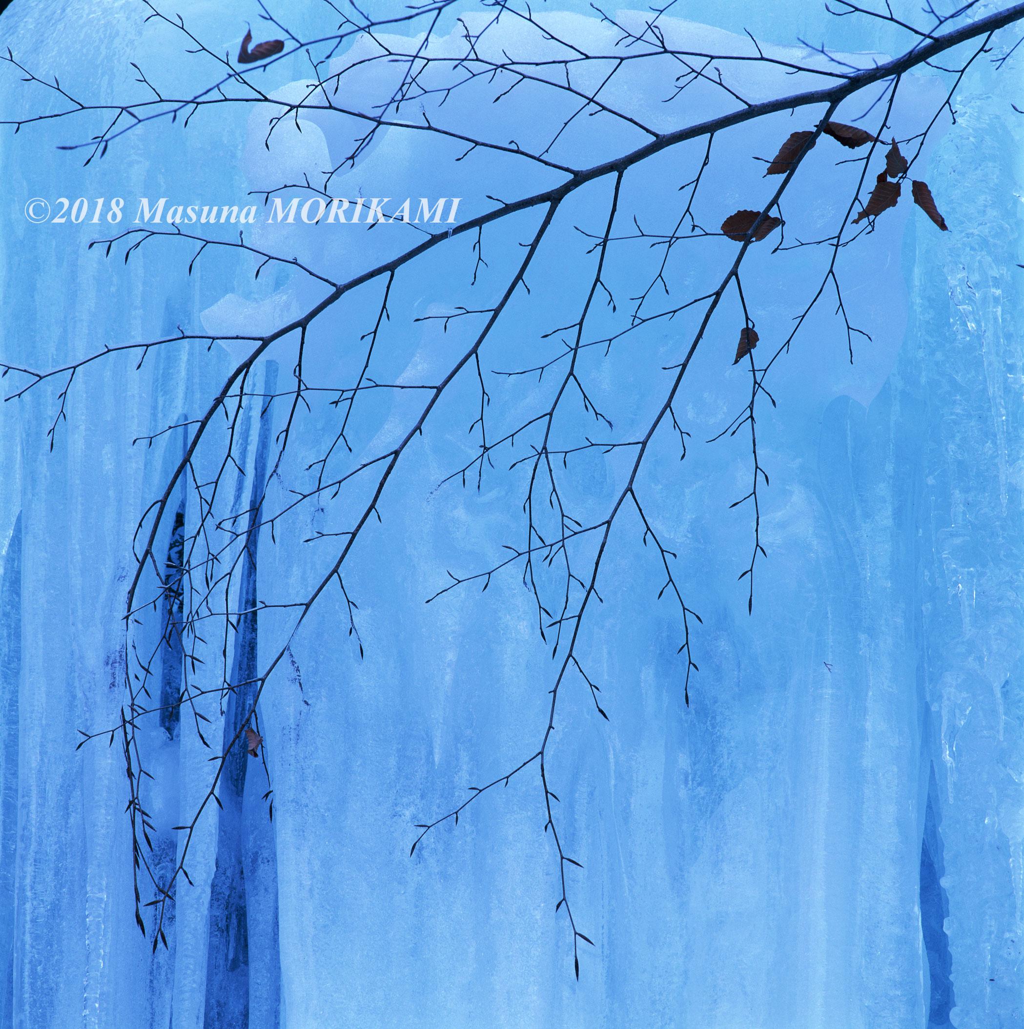 26 凍る枝先/愛知県設楽町/2006.1.22 14:20