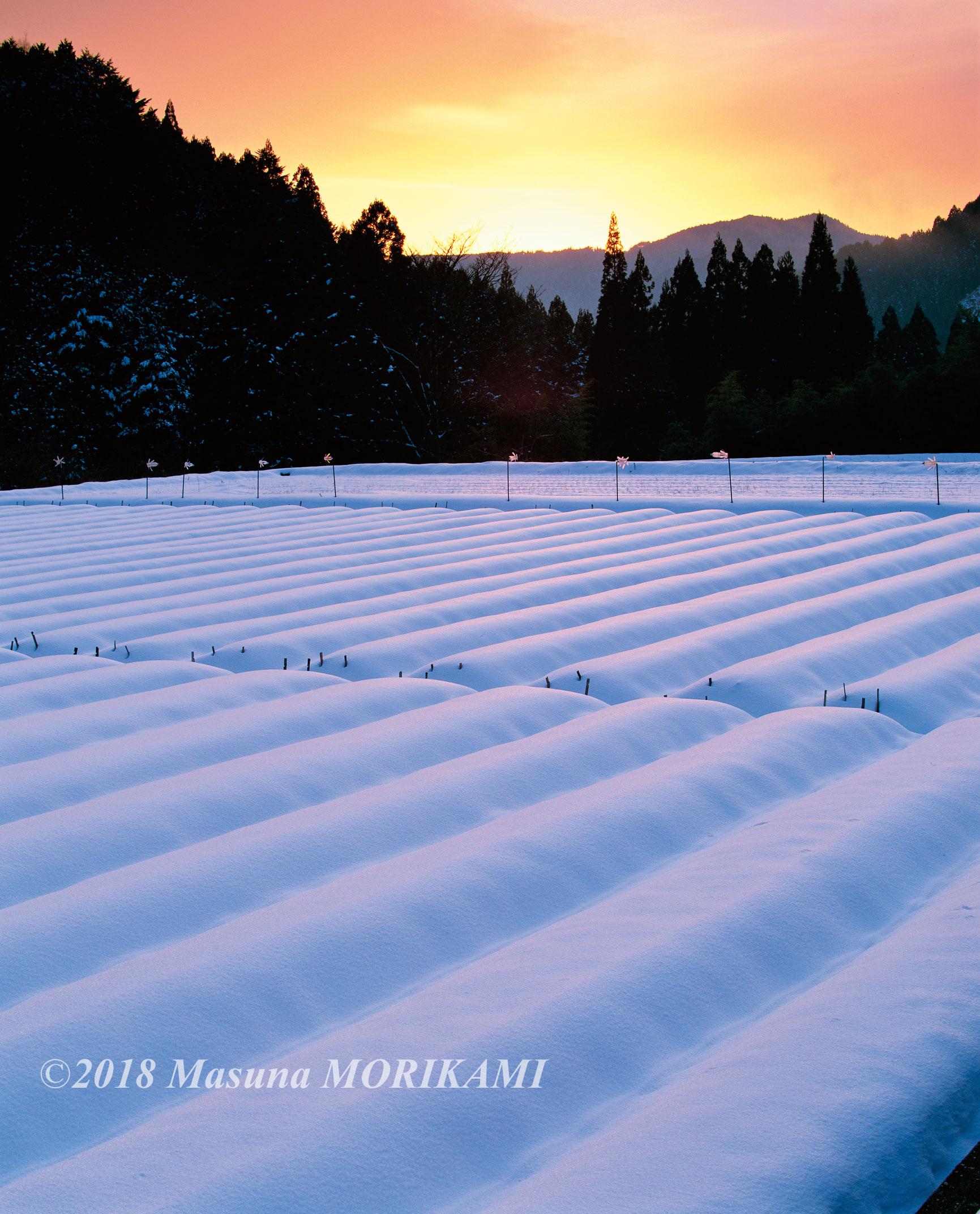 28 夕映えの雪畑/長野県根羽村/2010.1.4 16:30