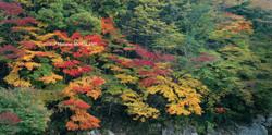 08 色めく渓谷/愛知県豊根村/2010.11.7 15:00