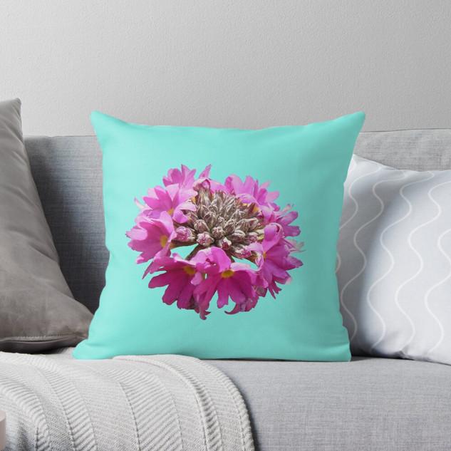 Purple Primula