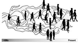 Depiction of a Braided Stream - from Ackermann & Schroeder 2020
