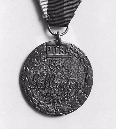 Dickins medal for Judy the POW dog