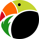 Toucan Painting Projects