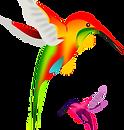 colibri-md.png