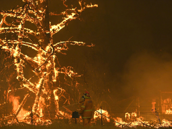 Australia's Fires and Future Sustainable Ecosystems