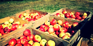Apples so local, they practically roll to our door.