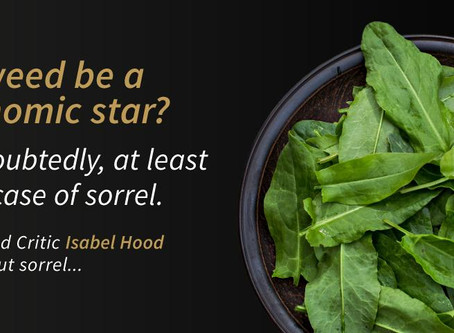 Sorrel - weed or gastronomic star?