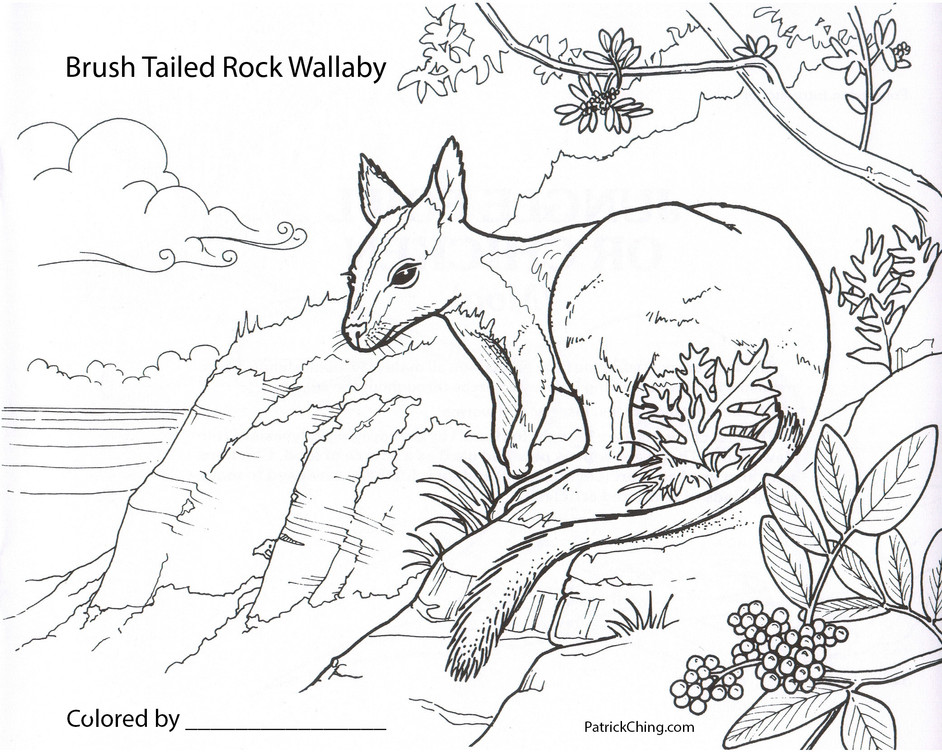 Bush Tailed Rock Wallaby