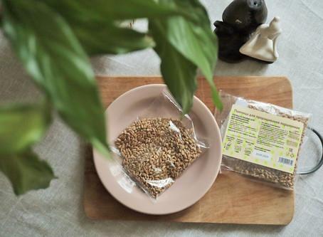 Проращивание пшеницы дома. Советы и рецепты