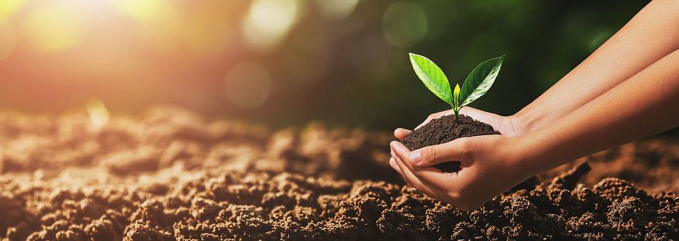 hand-holding-small-tree-planting.jpg