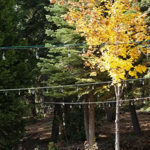 Fall Colors | Outdoor Weddings