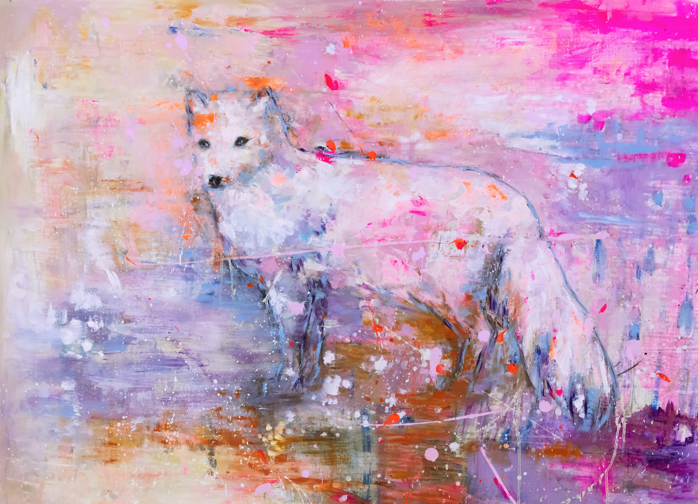 Arctic Fox 2019.jpg