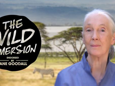 Kaikki alkoi apinalelusta - Jane Goodallin elämäntarina