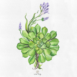 Succulent Lavender @ SandieTurchyn