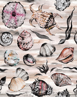 Shell Collection @ SandieTurchyn