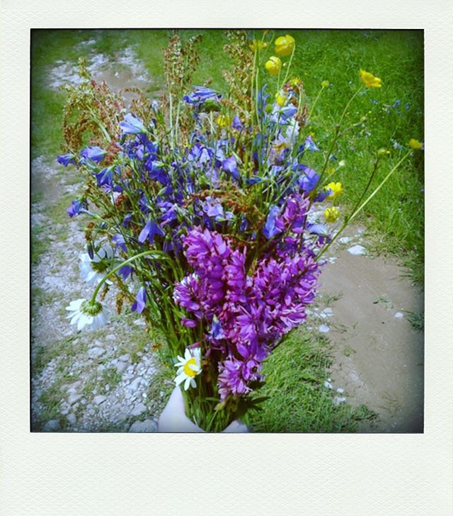 Wildflowers picked on a long walk on Igm