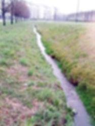 Bealera nel parco Rubbertex, Torino