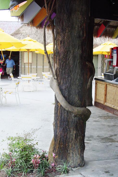 Shotcrete Artistic Element - Tree 2.JPG