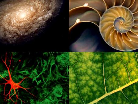 """Sacred Geometry"" Translating The Fractal Language of The Universe"