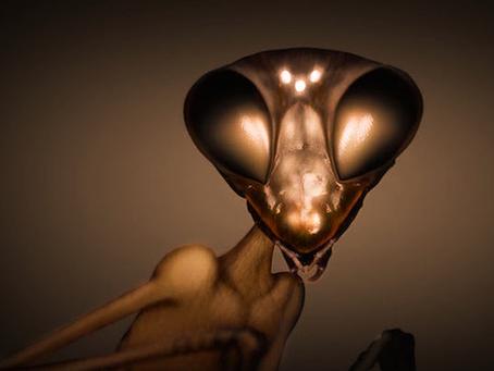 My ET Encounter Of the Strange Kind