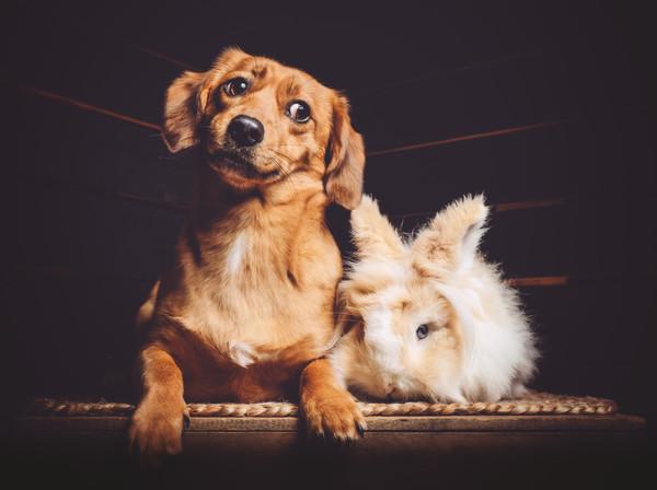five and a half dog blog